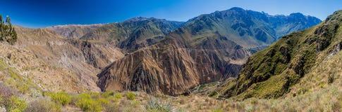 Каньон Colca стоковое фото