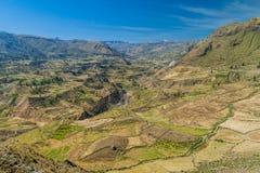 Каньон Colca стоковые фото