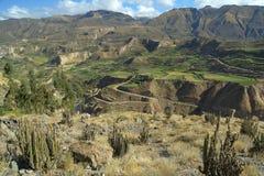 Каньон de Colca, Перу Стоковые Изображения