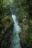 Каньон Martvili в Georgia Красивое естественное с взглядом o стоковое фото