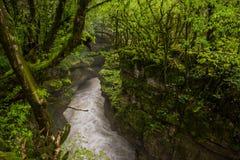 Каньон Martvili через лес стоковые изображения rf