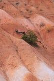 каньон np bryce Стоковые Изображения
