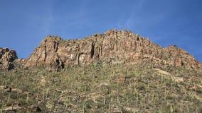 Каньон Saguaro стоковое изображение