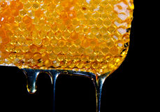Капание меда от меда comb.JH Стоковое Изображение
