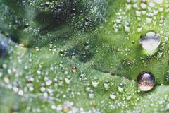 Капелька на лист в утре Стоковое Фото