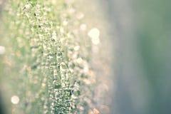Капелька на лист в утре Стоковые Фото