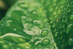 Капелька на лист в утре Стоковое Изображение