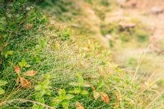 Капельки воды на траве, зеленом цвете и желтом цвете Стоковая Фотография