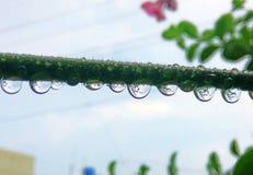 Капельки дождя стоковое фото rf
