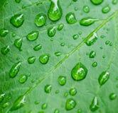 Капельки на листьях стоковое изображение rf