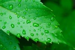 Капельки на листьях стоковое изображение