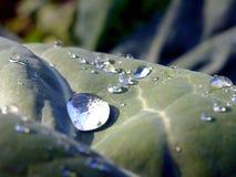 Капельки росы на зеленых листьях стоковая фотография rf