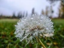 Капельки росы Стоковая Фотография