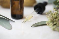 Капельница эвкалиптового масла стоковое изображение rf