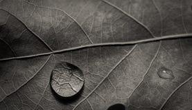 Капелька воды на лист Стоковое Изображение