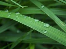 Капельки воды на листьях показывая текстуру Стоковые Фотографии RF