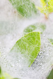 Капельки воды на сетях паука Стоковые Фотографии RF