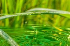 Капельки воды от зеленых листьев травы Стоковая Фотография RF