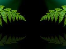 Капельки воды на листьях папоротника Стоковое фото RF