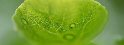 Капельки на листьях Стоковые Фото