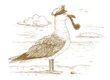 Капитан чайки нарисованный вручную Стоковое Фото