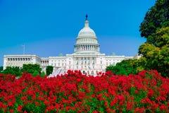 Капитолий строя пинк DC Вашингтона цветет США Стоковые Фотографии RF