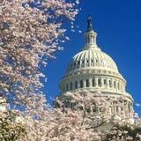 Капитолий США весной стоковое изображение rf