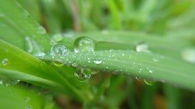 капли росы выровняли край травы стоковая фотография rf