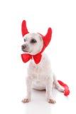 Капризная собака дьявола Стоковое Фото