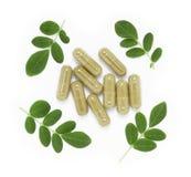 капсула moringa oleifera Стоковые Фото