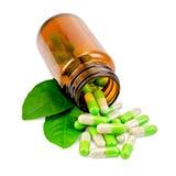 Капсулы зеленеют в открытом опарнике с листьями Стоковое Изображение RF
