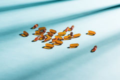 Капсулы геля Витамин A, e, рыбий жир, масло первоцвета, амбар o риса Стоковое Изображение RF