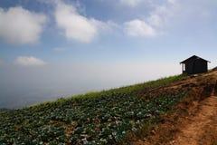 Капуста поля в горе Стоковые Фото