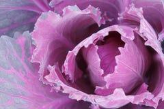 капуста Стоковые Фото