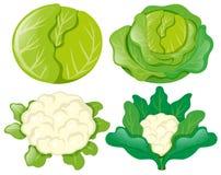 Капусты и цветные капусты на белизне бесплатная иллюстрация