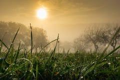 Капли росы в солнце утра Стоковые Изображения