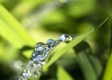 Капли росы крупного плана на траве стоковое изображение rf
