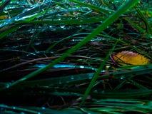 Капли росы на траве Стоковые Изображения RF