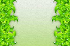 Капля росы на листьях Стоковые Фото