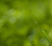 Капля росы на лист Стоковые Фото