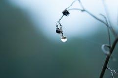 Капля росы на семени Стоковое фото RF