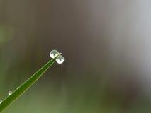 Капля росы на траве Стоковые Изображения RF