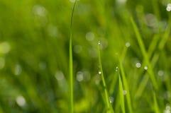 Капля росы на траве Стоковое Изображение