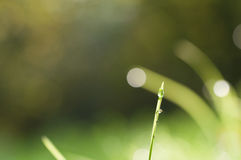 Капля росы на траве Стоковое Изображение RF