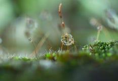 Капля росы на траве Стоковая Фотография RF