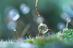 Капля росы на траве Стоковое Фото
