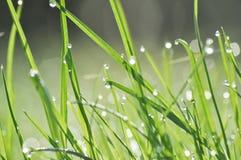 Капля росы на траве Стоковая Фотография