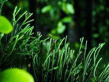 Капля росы Стоковое Фото