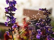 Капля росы Стоковое Изображение RF