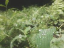 Капля росы Стоковые Фото